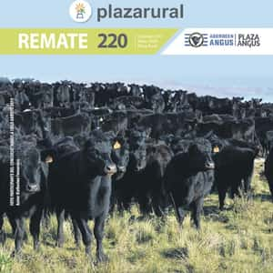 Remate 220˚ Remate Plaza Rural