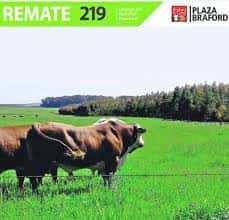 Remate 219˚ Remate Plaza Rural