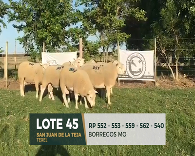 Lote Lote 45