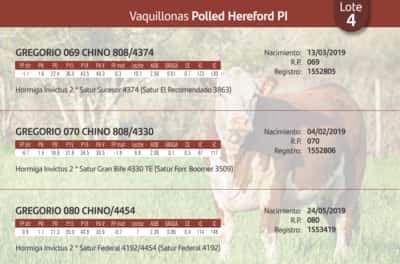 Lote Vaquillonas Polled Hereford PI