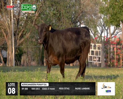 Lote 888