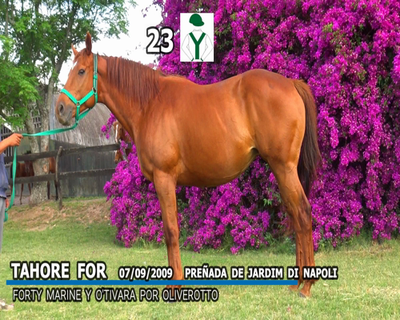 Lote TAHOE FOR