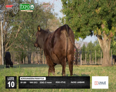 Lote 889