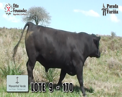 Lote LOTE 9