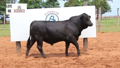 Lote Lote 66