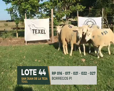 Lote Lote 44