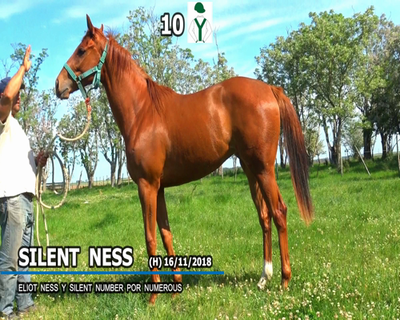 Lote SILENT NESS