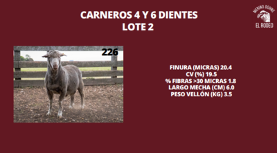 Lote Lote 15