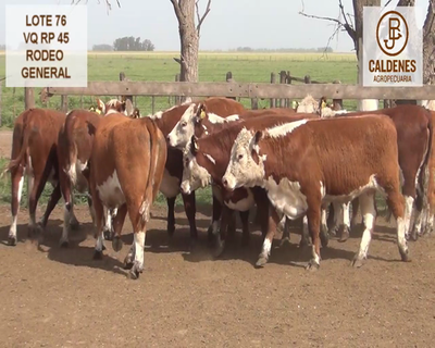 Lote VAQUILLONAS HEREFORD RG (Corral 76)