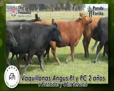 Lote VAQUILLONAS A.ANGUS PI. y  PC