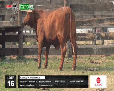 Lote 3320