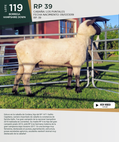 Lote Lote 119