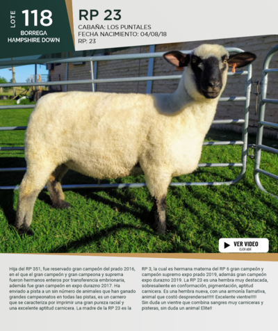 Lote Lote 118