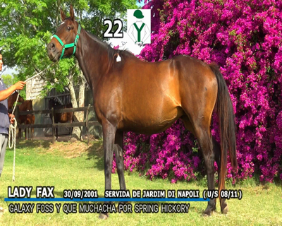 Lote LADY FAX