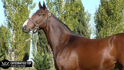 Lote CATEDRATICO TOP (CITYSCAPE - MISS TOP ONE)