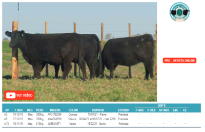 Lote Corral 10-3 hembras angus don pedro