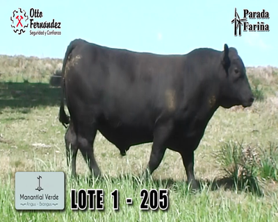 Lote LOTE 1