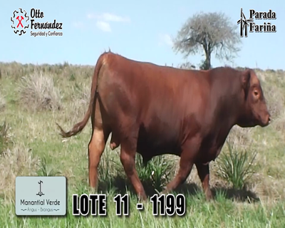 Lote LOTE 11