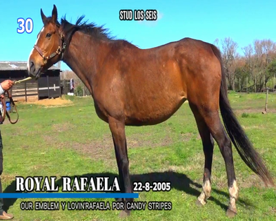 Lote ROYAL RAFAELA