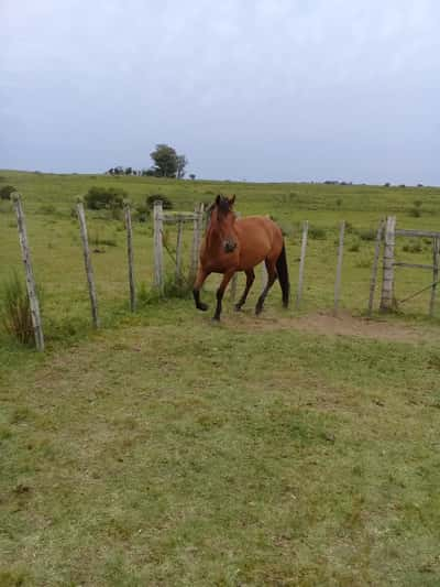 Lote Lote 23