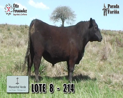 Lote LOTE 8