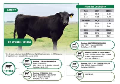 Lote RP 133