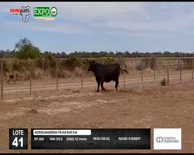 Lote 669
