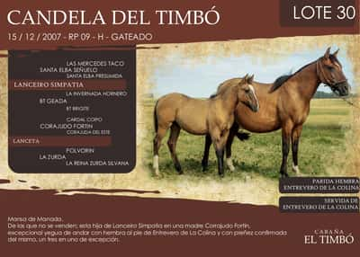 Lote  CANDELA DEL TIMBÓ