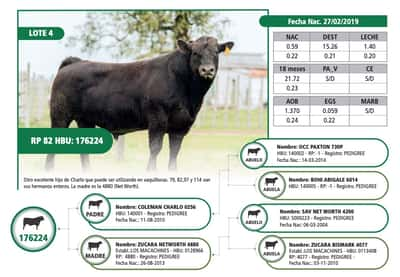 Lote RP 82