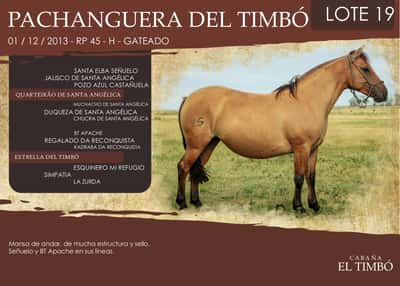 Lote PACHANGUERA DEL TIMBÓ