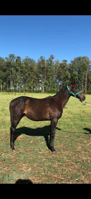 Lote BACK SEATTLE (ARG)