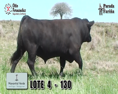 Lote LOTE 4