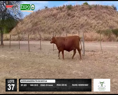 Lote 825