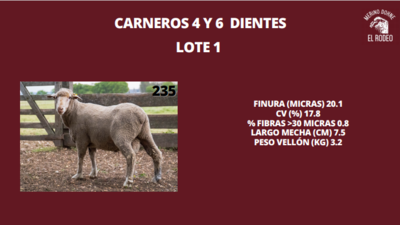 Lote Lote 14