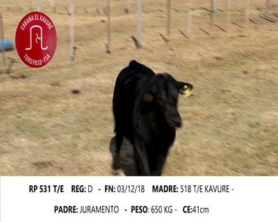 Lote KAVURE 531
