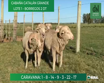 Lote Lote 16