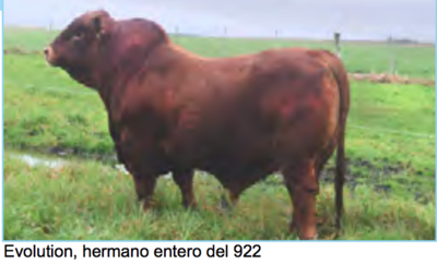 Lote Corral 2