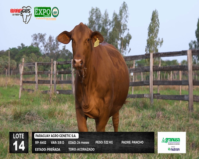 Lote 6452