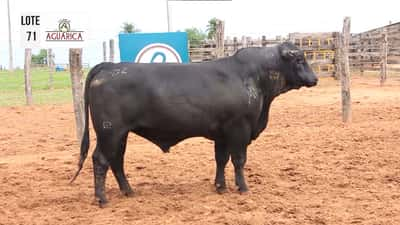 Lote Lote 71