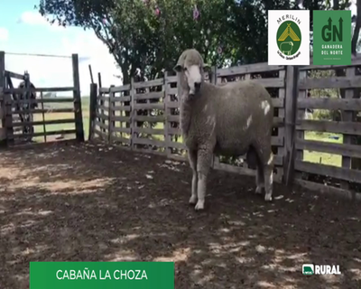Lote Lote 19