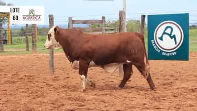 Lote Lote 60