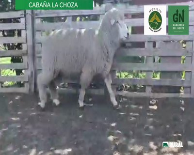 Lote Lote 18