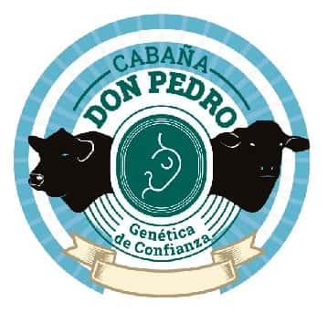 Lote Corral 2-2 hembras angus don pedro