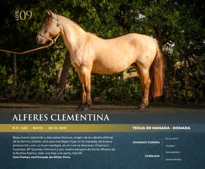 Lote ALFERES CLEMENTINA