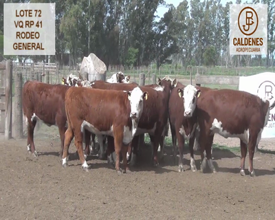 Lote VAQUILLONAS HEREFORD RG (Corral 72)