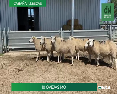 Lote Lote 12