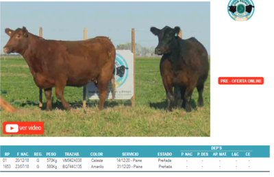 Lote Corral 8-2 hembras angus don pedro