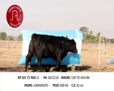 Lote KAVURE 521