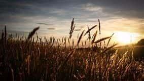 Ministério da Agricultura da Rússia elevou sua previsão de exportação de grãos na temporada 2018/19 para 42 milhões de toneladas