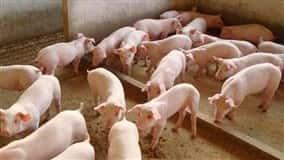 Contaminação pode ocorrer com a entrada de alimentos originários de países onde a doença vem se alastrando